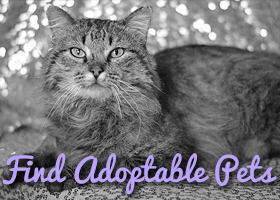 Find Adoptable Pets